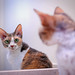 cat in the mirror by Abby Leigh photos