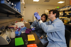 Do they work? Nutritional supplement ingredients tested by Auburn University researchers