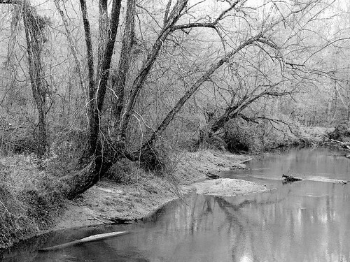 trees nature water creek altered reflections dark landscape flow virginia sketch blackwhite scenery noir moody dismal sandbar redhouse obstruction leafless blanc watercourse overhanging charlottecounty cubcreek
