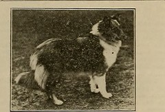 "Image from page 399 of ""Breeder and sportsman"" (1882)"
