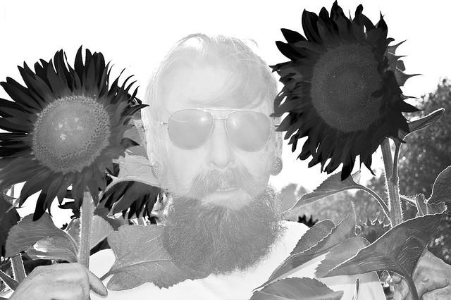 140725 Sunflowers-0036