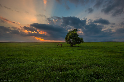 sunset sky horse tree green grass southdakota lone siouxfalls singleexposure flickrestrellas