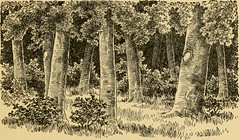 """Image from page 132 of """"Stories of pioneer life, for young readers;"""" (1900)"""