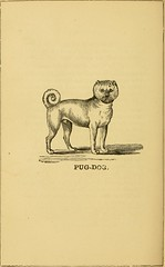 "Image from page 267 of ""Breeding, training, management, diseases & c. of dogs:"" (1877)"