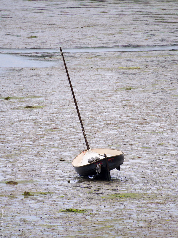Dans le Golf à marée basse ou profitant de la marée. 14785617562_2e8d8f255c_c