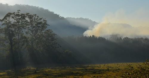 trees winter fog woodland landscape countryside smog shadows smoke earlymorning australia nsw smoky burnoff shaftsoflight springgrove ruralaustralia northernrivers rurallandscape smokysky morninglandscape pelicancreekvalley