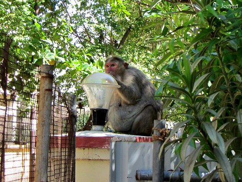 A huge monkey