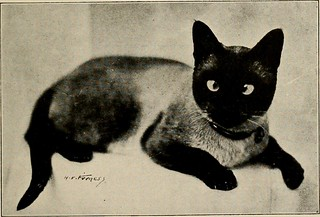 """Image from page 36 of """"Pets and how to care for them"""" (1921)"""