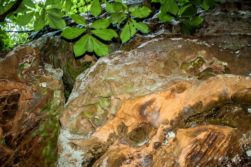 Bluffs of Beaver Bend Nature Preserve