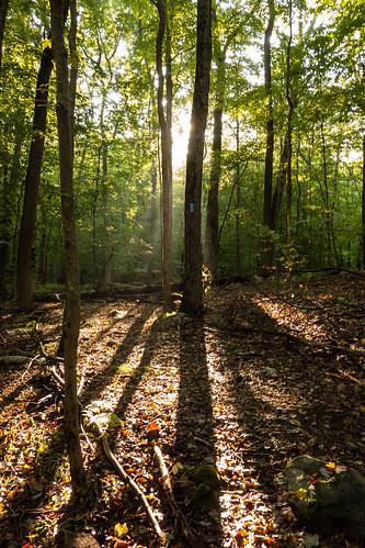 trees ny newyork forest sunrise woods shadows westchestercounty southsalem lewisboro sonydscrx100 onatrutownpark