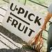9-9 fruita- u pick fruit