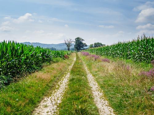 Camino Via Tolosana 555.jpg
