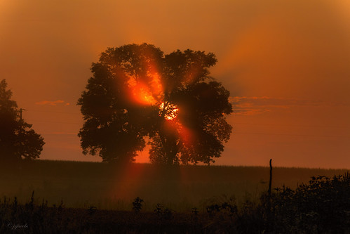 columbus tree fog wisconsin sunrise ©jrj