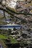 Hakone Nationalpark