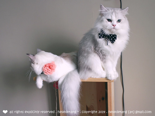 Dyllis & Dexter ft. Nekojam & Cat Socrates