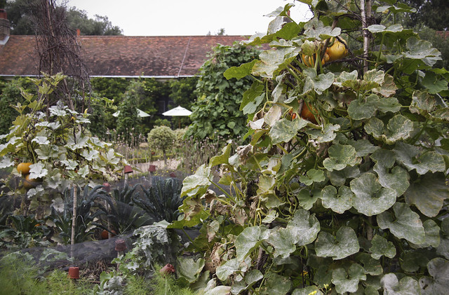 Ham House- Kitchen Garden