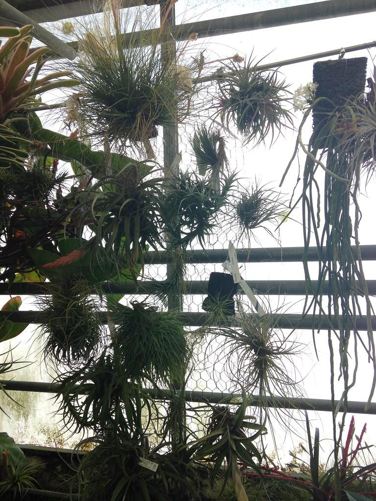 Orchidarium de Prangins 19119042188_2f4310c729_b
