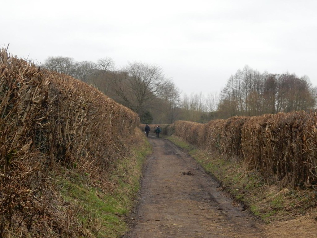 Bridleway hedges Chorleywood to Chesham