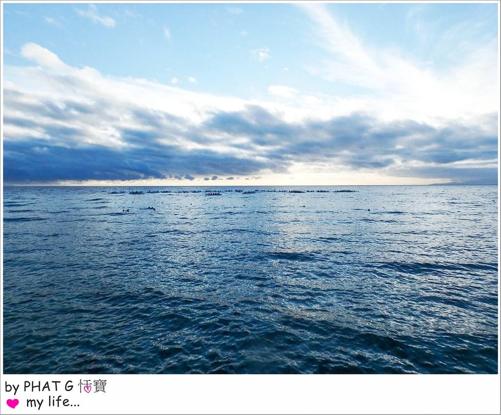 cebu whale shark 06-2