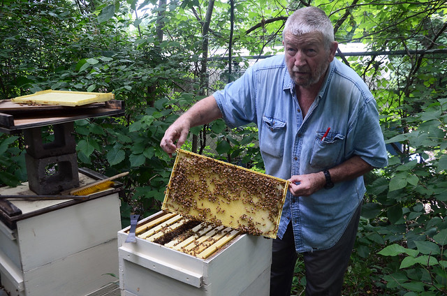 Local Beekeepers React to Plan to Save Bees, Other Pollinators