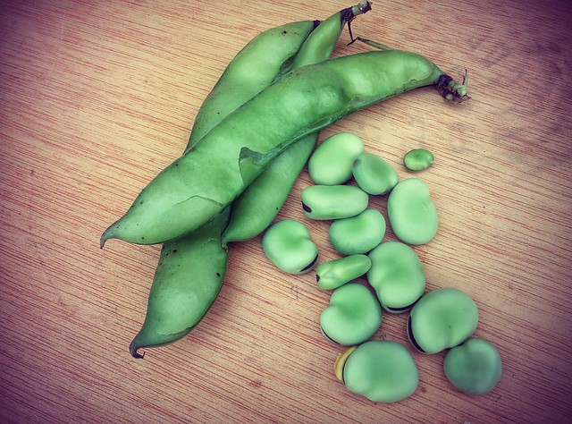 Broad beans, habas