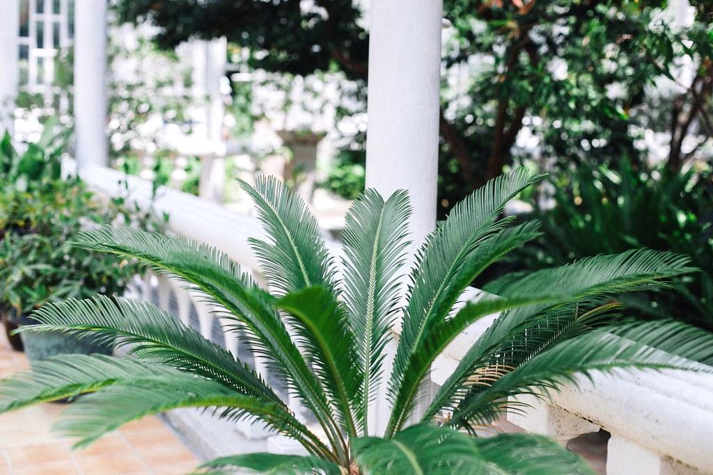 Seoul Greenhouse 008
