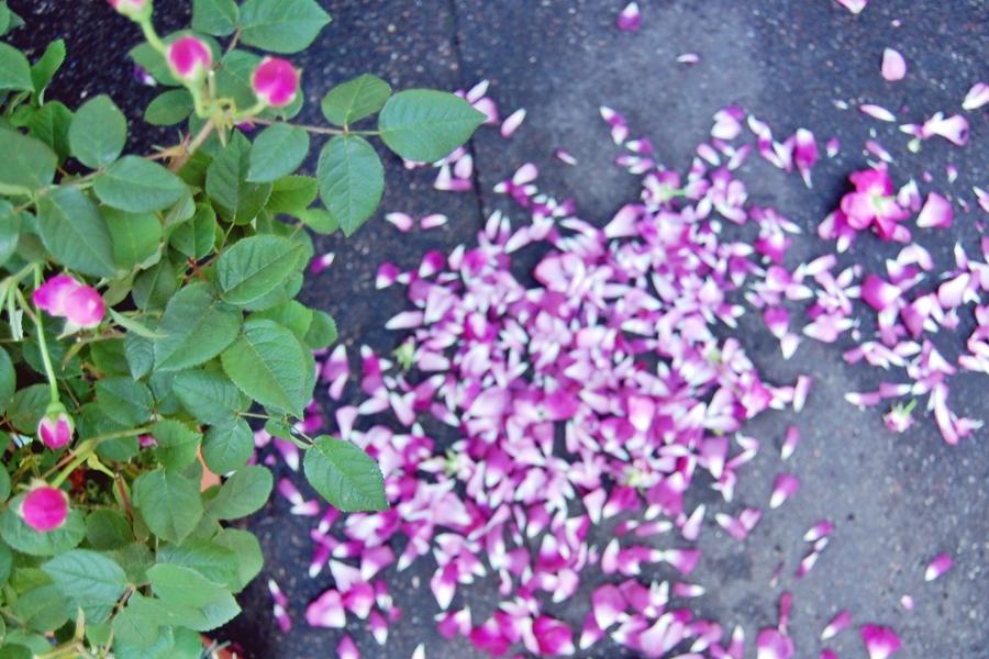 Marché aux fleurs (5)
