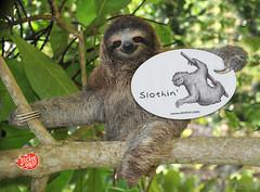 monkey(0.0), primate(0.0), lemur(0.0), kinkajou(0.0), animal(1.0), three toed sloth(1.0), mammal(1.0), fauna(1.0), wildlife(1.0),