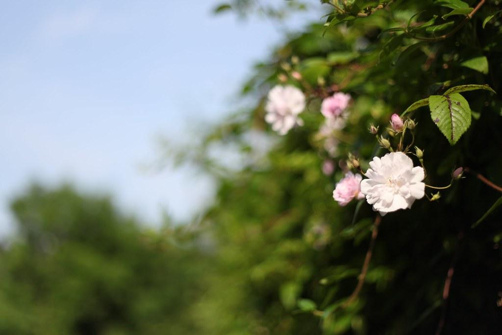 st agnes flowers