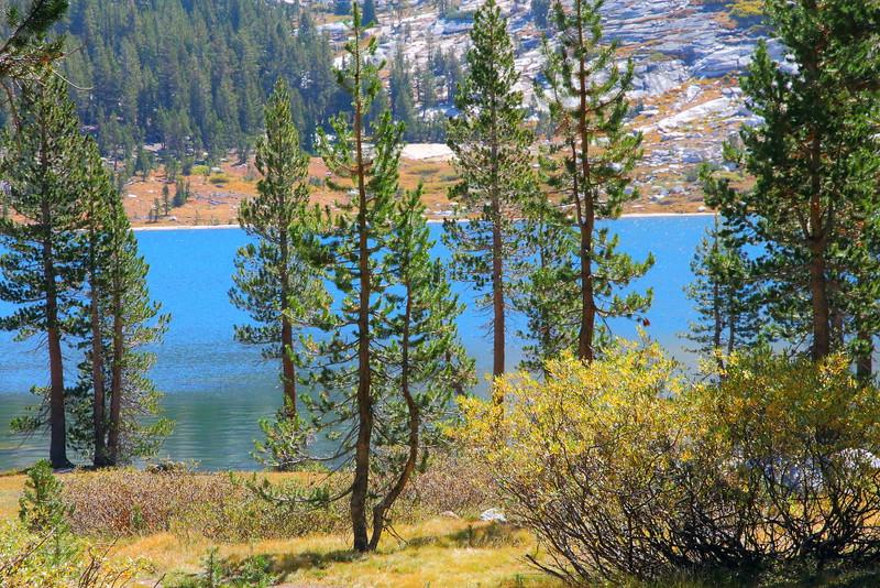 IMG_5009 Young Lakes Trail, Yosemite National Park