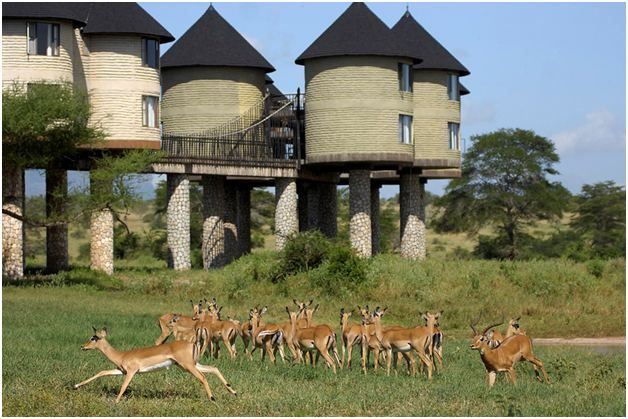Sarova Salt Lick Game Lodge - Wildlife