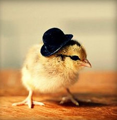 Top-10-Baby-Chicks-in-Hats-4