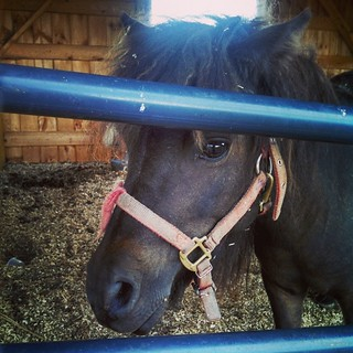 Another cutie pie! #farmstand #farm #farmanimals #horse #sosweet #toocute #love #newhampshire