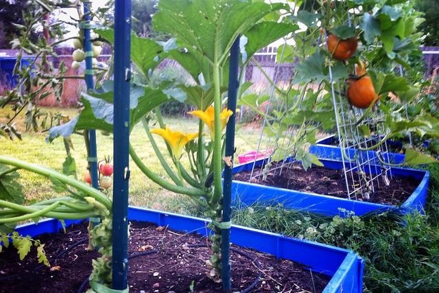 Zucchini & More Garden