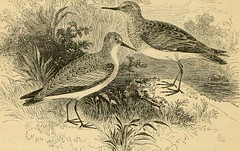 """Image from page 421 of """"A history of British birds"""" (1871)"""