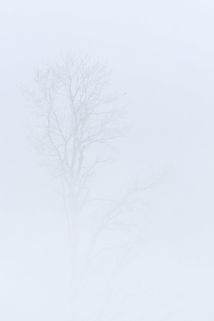 Fog shrouds trees at Ridgefield National Wildlife Refuge
