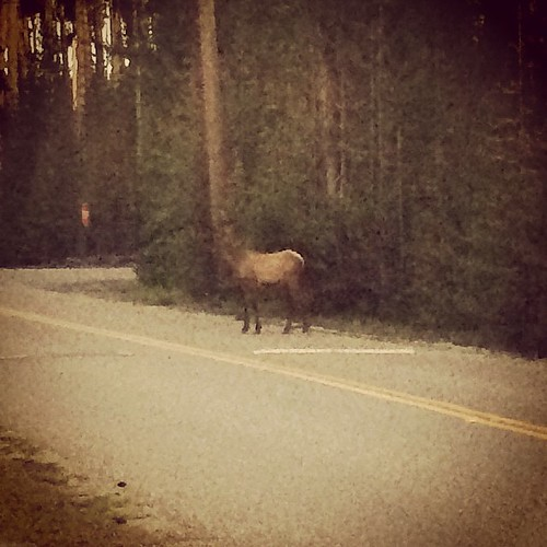 Check out this elk