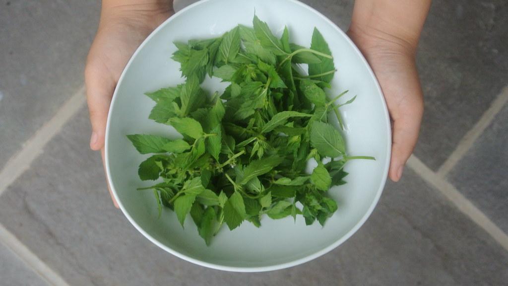 Wild Mint on Food52