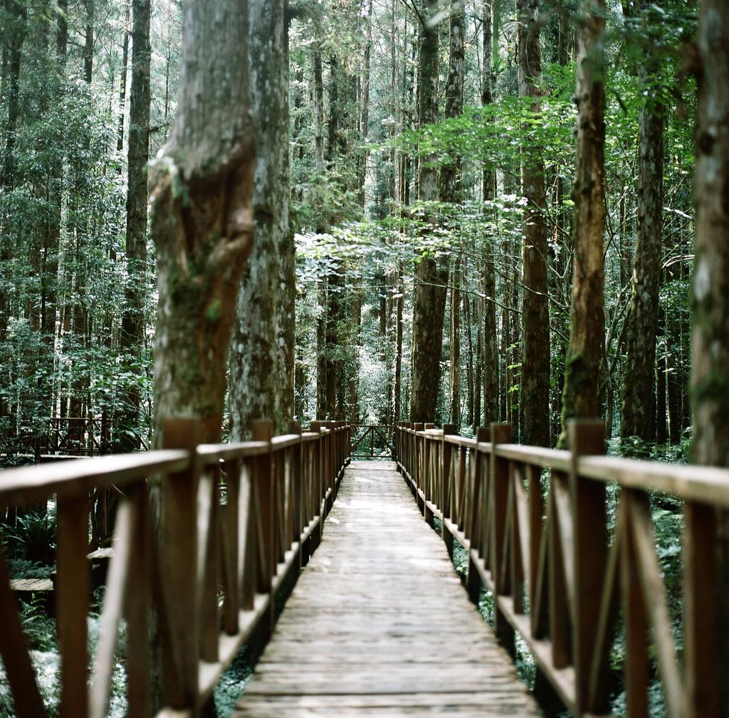 明池 + 林中木道
