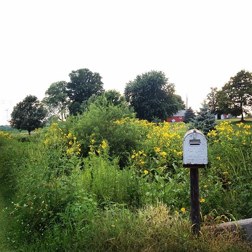 Rural Route Address #country #wildflowers