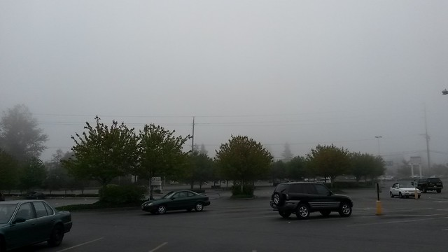 These foggy mornings are awesome