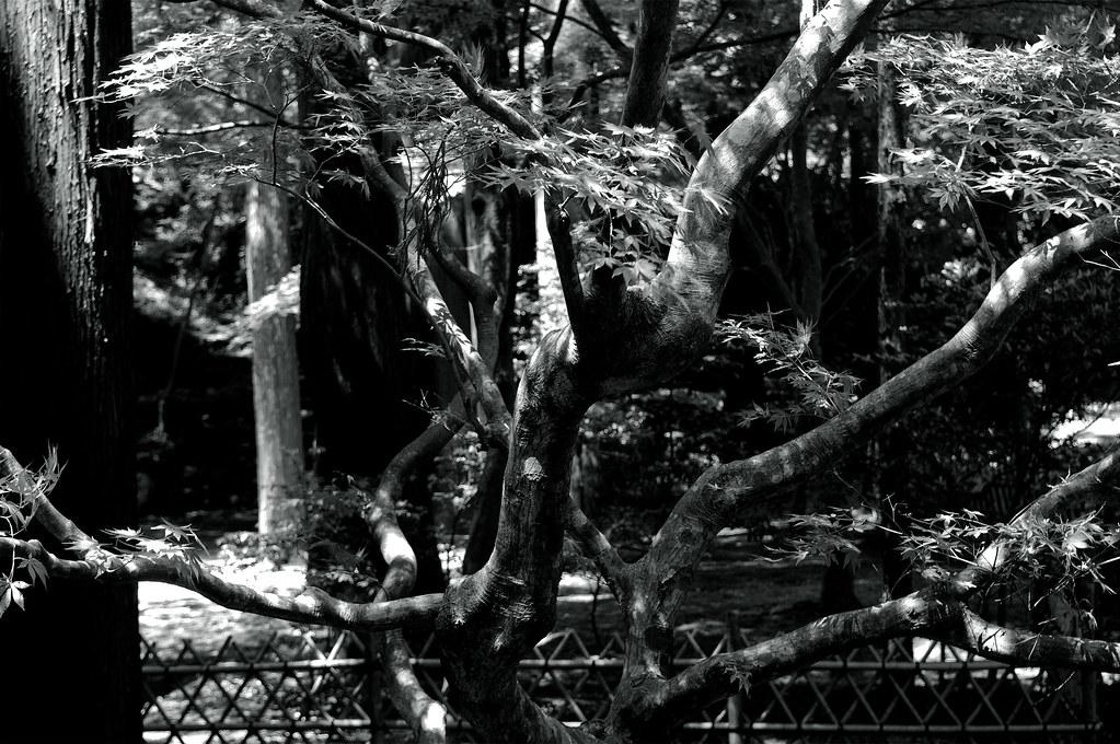 a tree|福井県若狭町