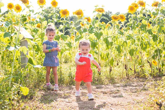 2014-08-08 Sunflower maze-037.jpg