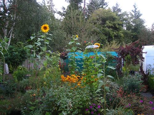Twilight in the garden