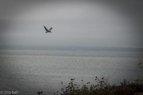 I wish....I could fly...