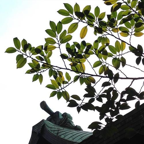 家族連れとか、年配のカップルとか、いろんな人が訪れてる。ここは、落ち着ける場所。 #天祖神社 #大塚