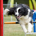 2014_06_15 Coupe de Luxembourg Agility