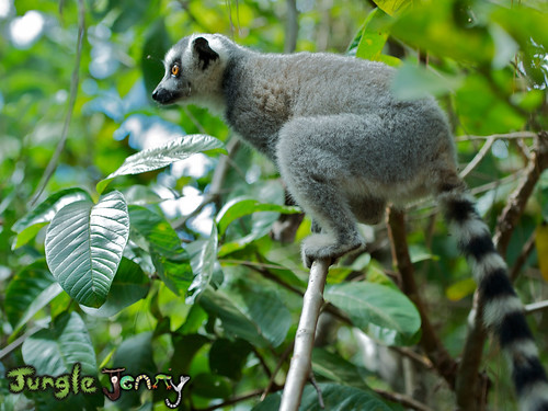 Jungle Jenny posted a photo:	Madagascar