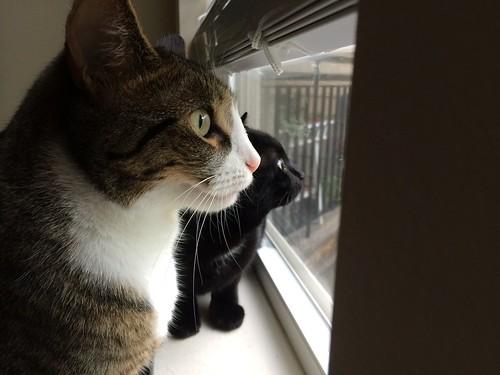 Amelia and Martha by the window