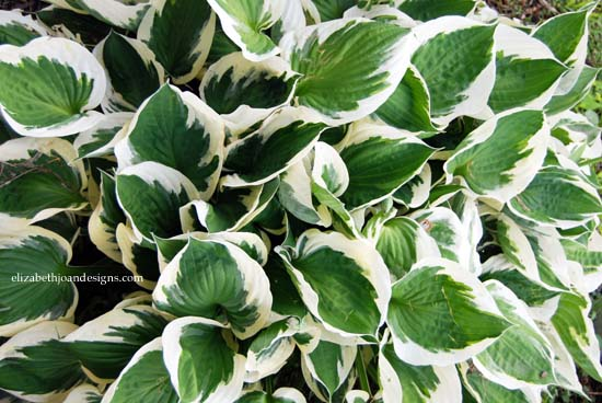 hosta wreath 2